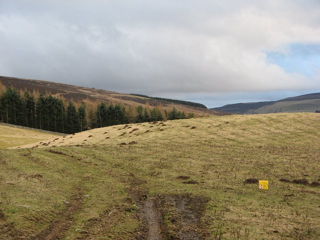 Mole infested pasture, Needs