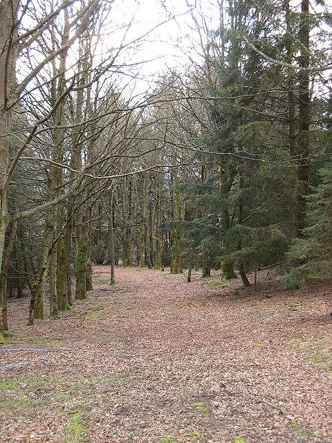 Woodland, Bellaty Lodge