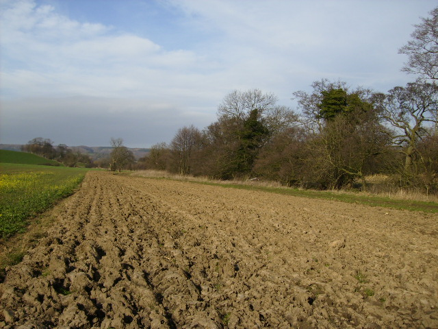 The Bridleway to Wildon Grange runs up the field margin here