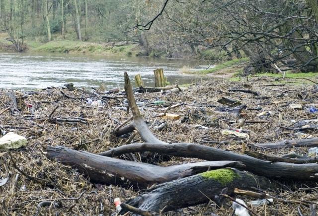 Haugh Wood - Ribble riverbank