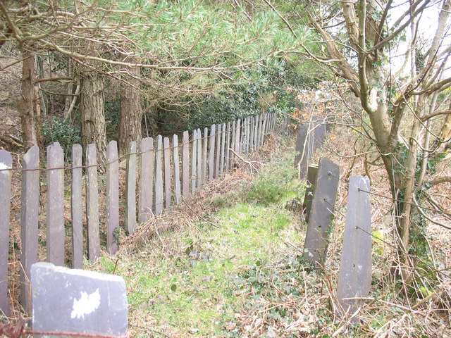 The slate fenced quarryman's path fringing the Ty'n Rallt upper plantation