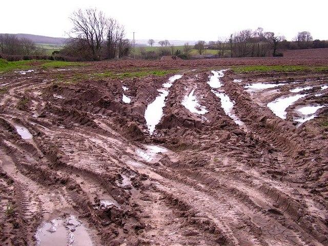 Muddy Farmland