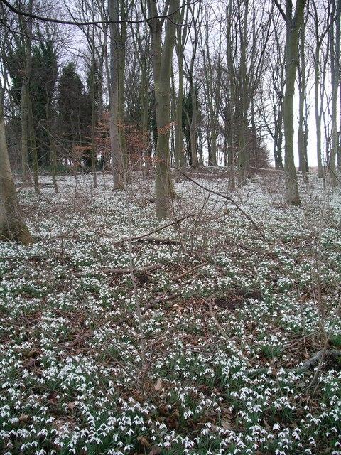 Woodland adjacent to Ford Castle
