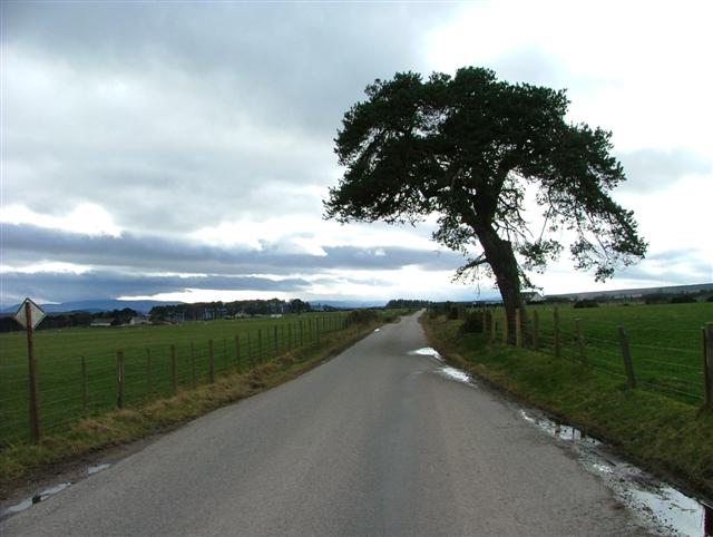 Tree by the Roadside