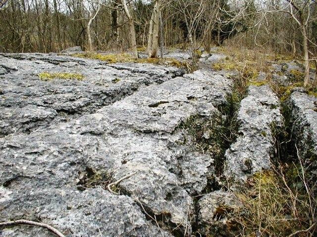 Limestone Pavement, Township Plantation