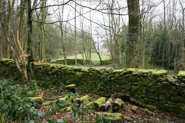 Wall With Field in Clearing Beyond