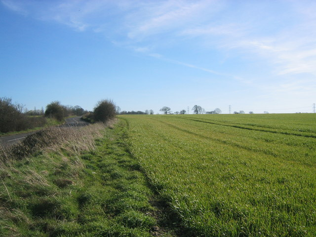 Field of crops, beside road from Epping.