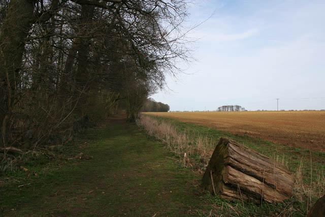 Woodland meets farmland