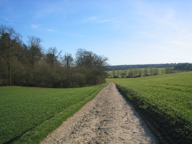 Private metalled road, through field of crops