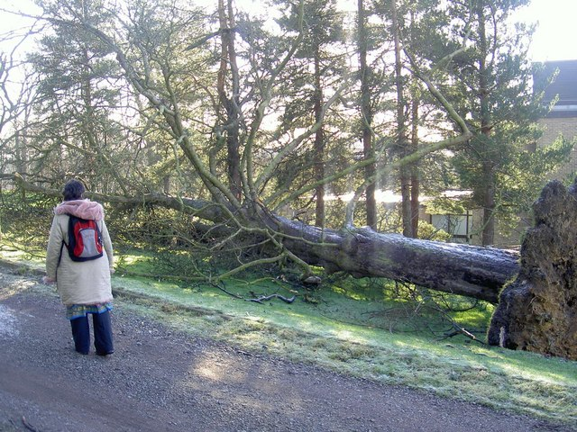 Grounds of Yorkshire Sculpture Park showing a tree uprooted in the storms of January 2007