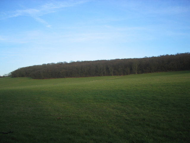 Galleyhill Wood from the road beside Marsh Hill House