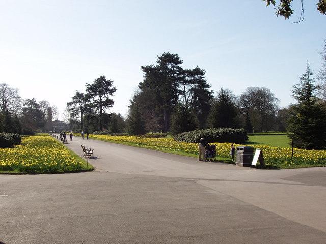 Kew Gardens Broad Walk with daffodils