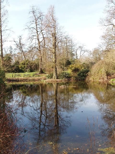 Waterlily pond, Kew Gardens