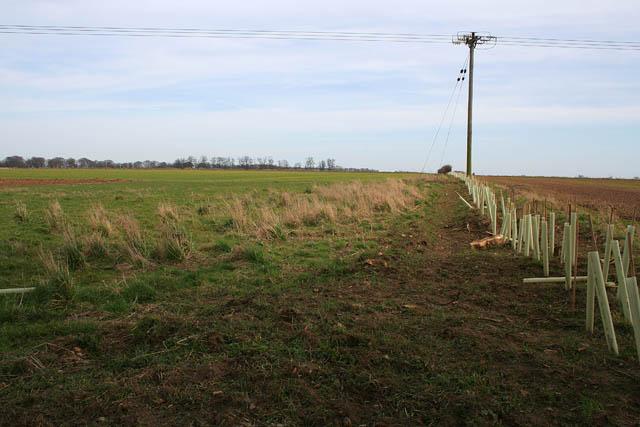 Farmland at Belton Ashes