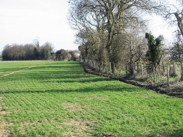 Looking NE along field boundary