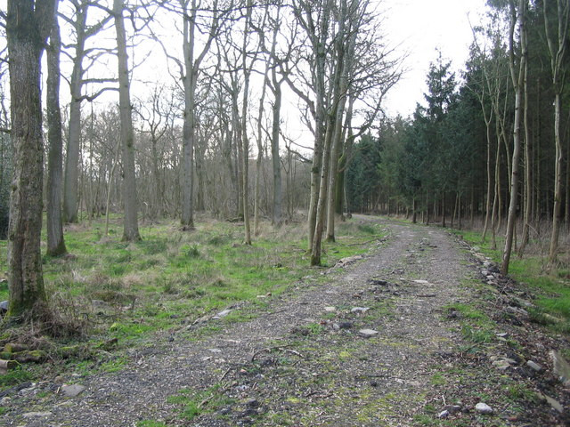 Track through Norridge Wood