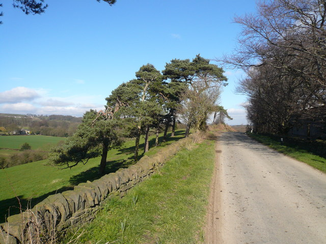 Windswept Pines opposite Bolehill Farm