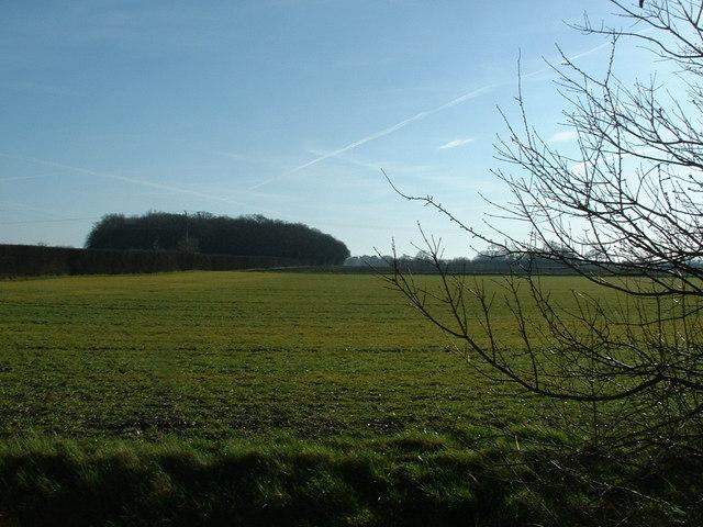 Vicarage Grove (Wenhaston) from Bartholomew's Farm