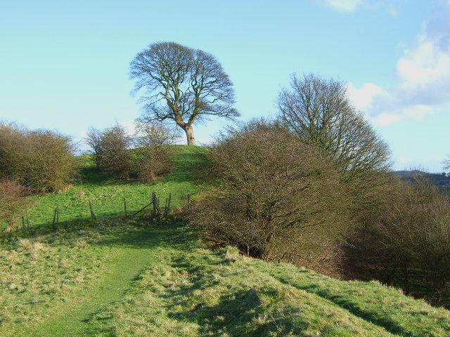 Will Shore's Tree