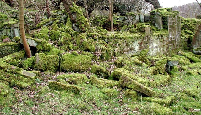 Callis Wood
