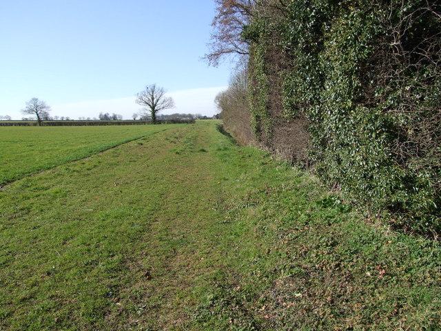 Footpath Beside Hedge