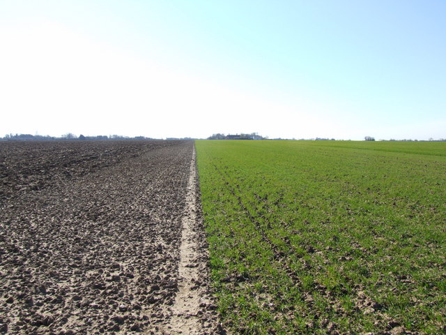Footpath Along Crop Boundary