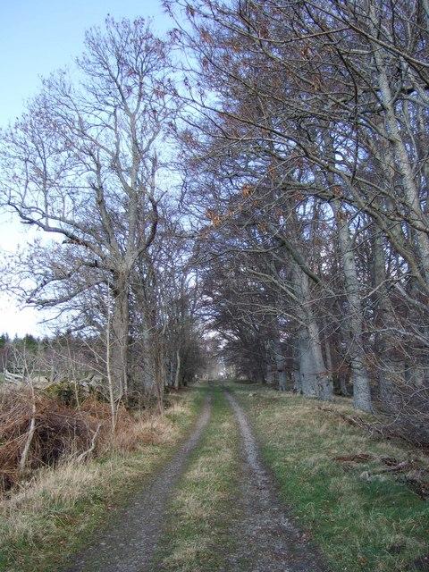 Track alongside Tarland road