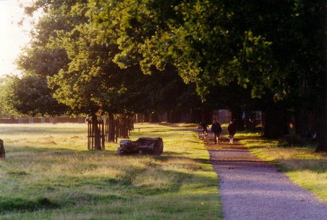 Path in Bushy Park