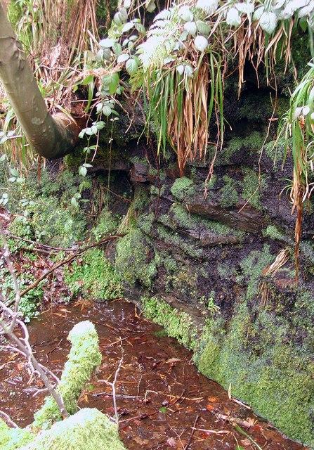 Caty Well Brook, Wainstalls