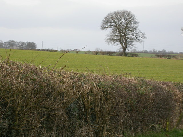 View over the hedge towards Woodhouse Grange