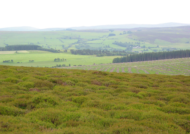 North-western slopes of Y Foel