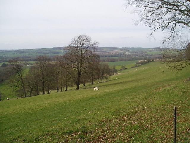 Downland alongside Old Winchester Hill Lane