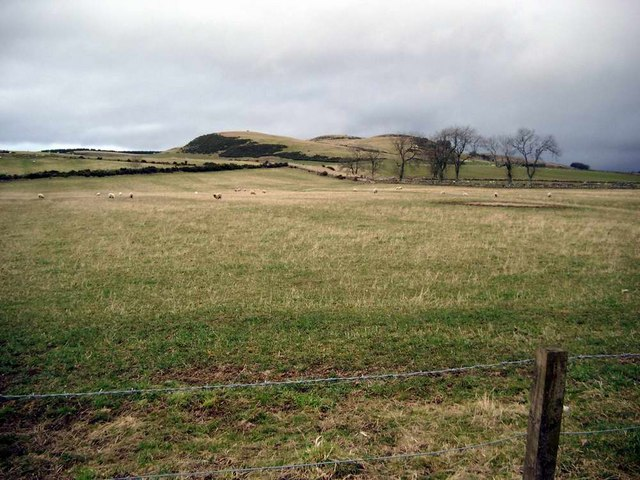Sheep grazing below The Carrach