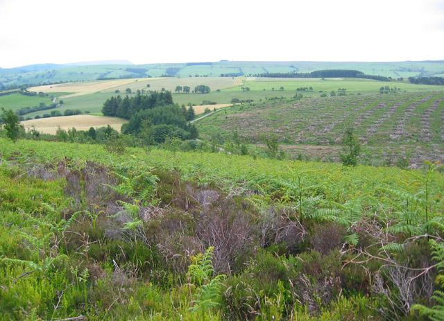 Felled area in Nant-y-Dramwys Wood