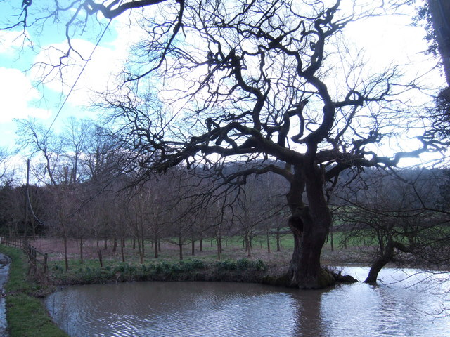 Twisted tree and pond