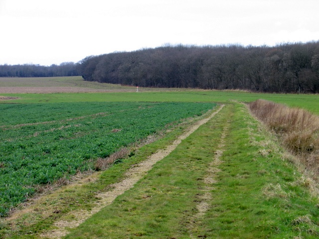 Field track leading to Little Haw Wood