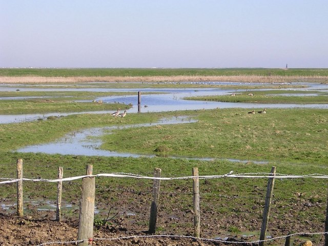 Geese on Stoke Marshes
