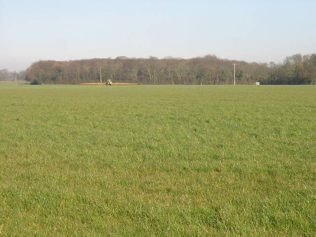 View across grassland to Brown's Wood