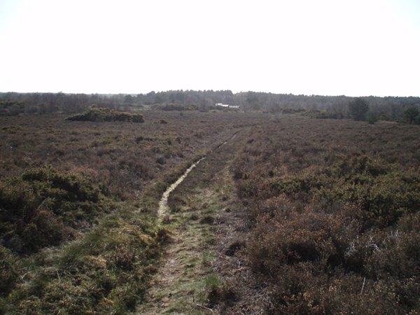 Track across Kelling Heath