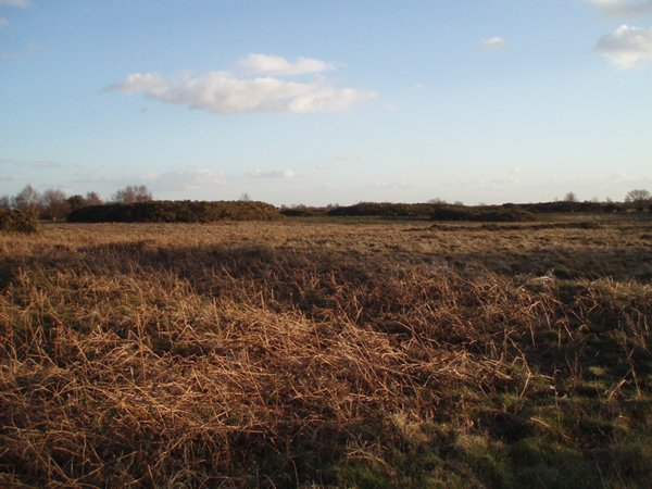 Salthouse Heath