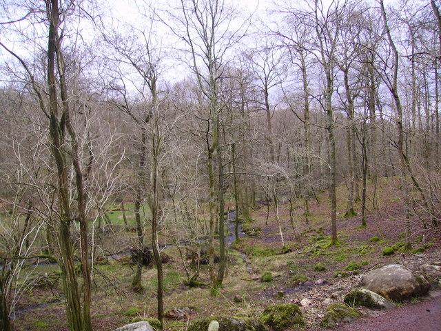 Woods, Big Parrock