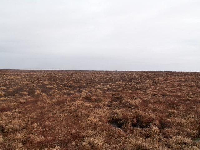 Quickcleugh Moss
