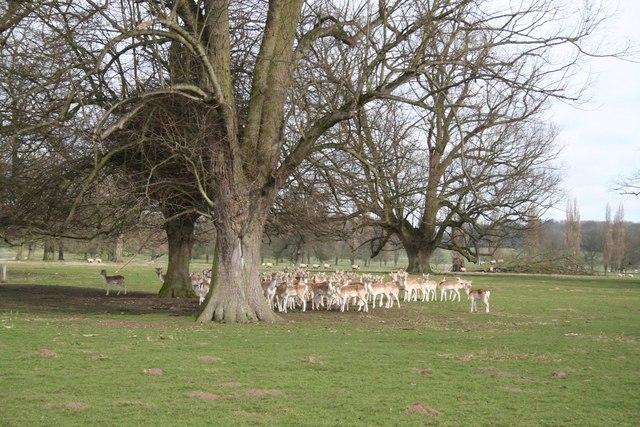 Revesby Deer Park