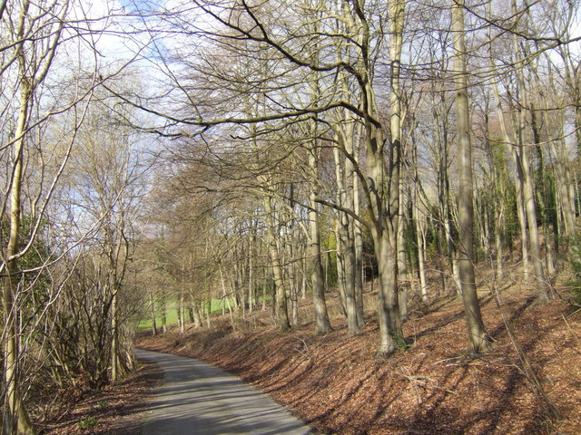 Lane through the beechwood