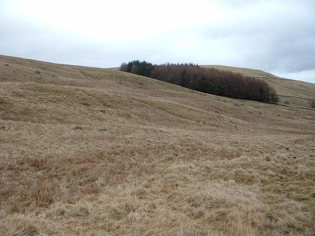 Shelterbelt on Duchray Hill