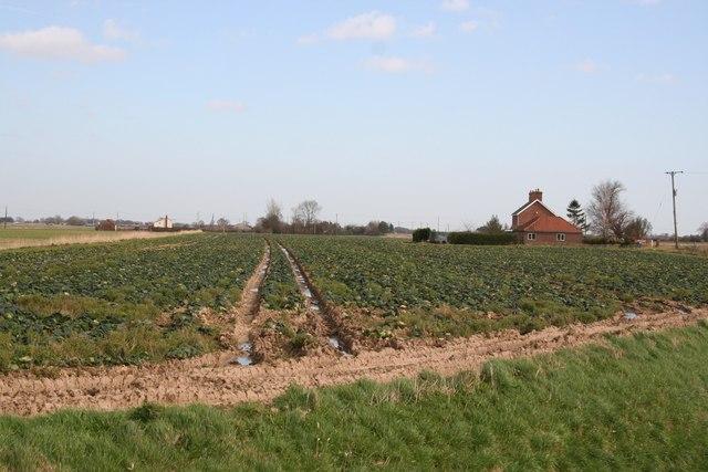 Gride Bridge Farm
