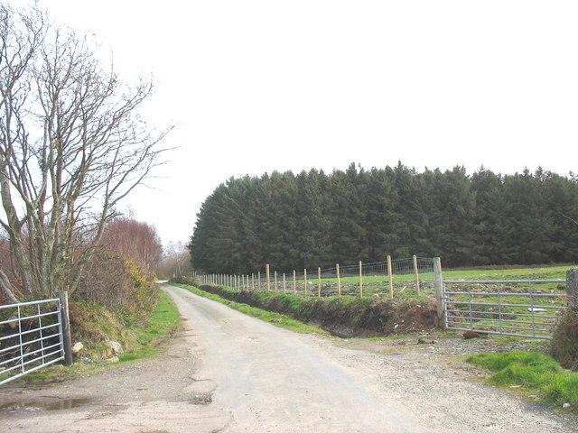 The Pentir road between Coed Rhos Fawr and Coed Tyddyn Forgan