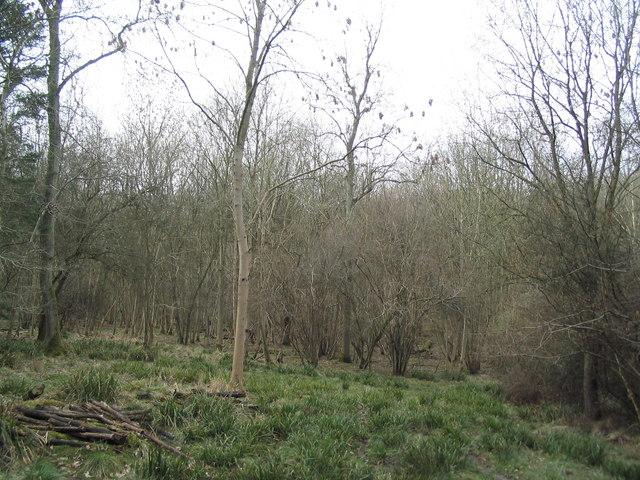 Woodrush and coppice, Geddington Chase Wood