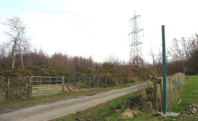A pylon towers over Coed Rhos Fawr