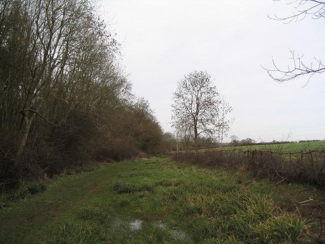 Byway along edge of Geddington Chase Wood